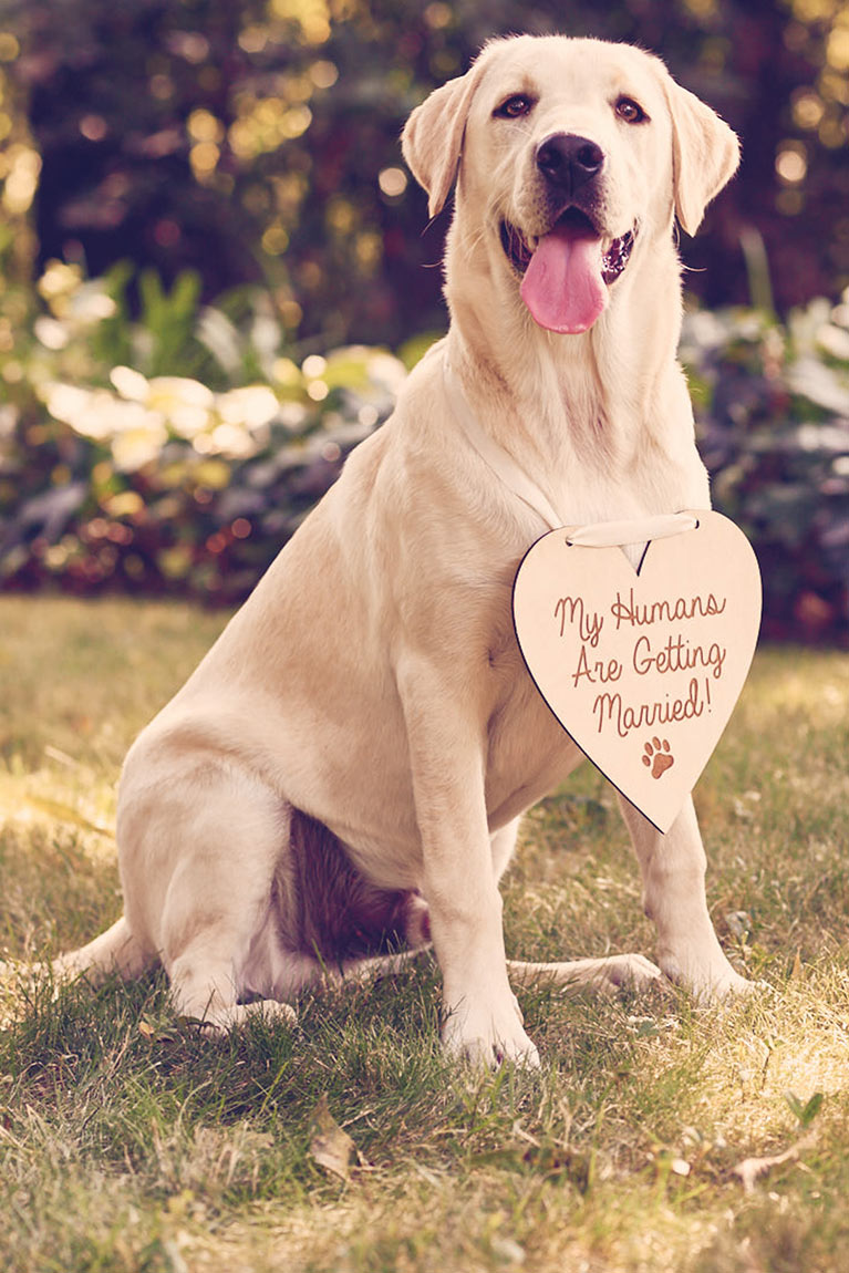 yellow lab sitting with a heart shaped sign that reads 'My humans are getting married!'