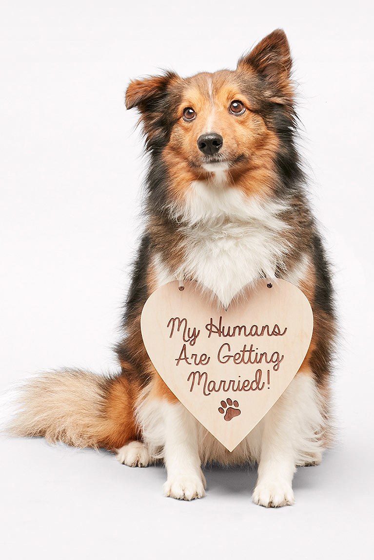 Dog with wooden My Humans Are Getting Married sign on collar