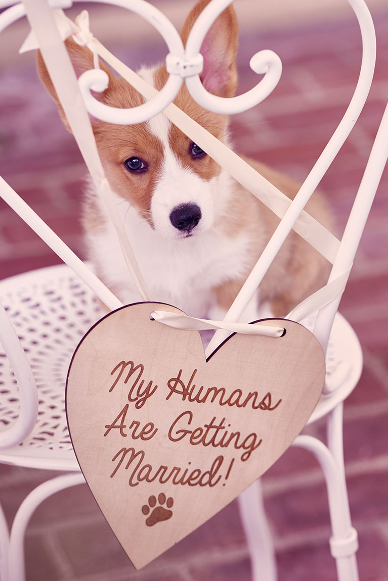 Puppy on garden chair with wooden My Humans Are Getting Married sign