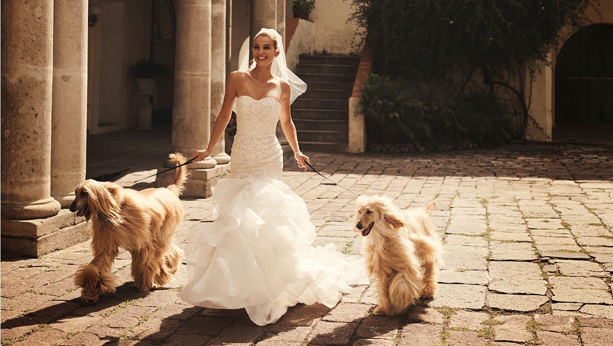 Bride wearing strapless, trumpet wedding dress with her two dogs.
