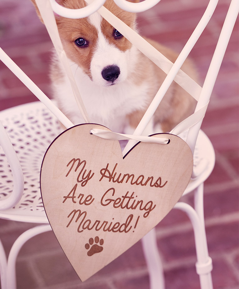 Dog sitting on chair with heart shaped sign that reads 'My Humans Are Getting Married'
